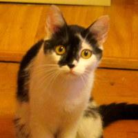 Ha a macskáknak online társkereső profilok lennének