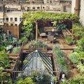 Szuperzöld - tetőkerteket a házakra!