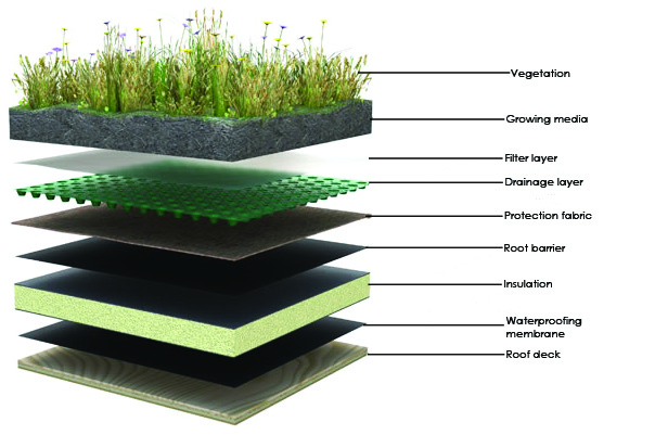 green-roof-layers2.jpg