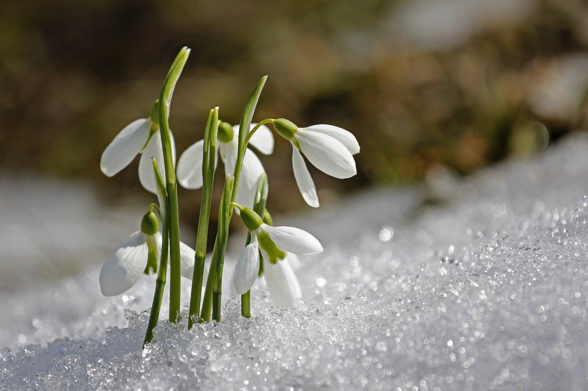spring-1166564_1920.jpg