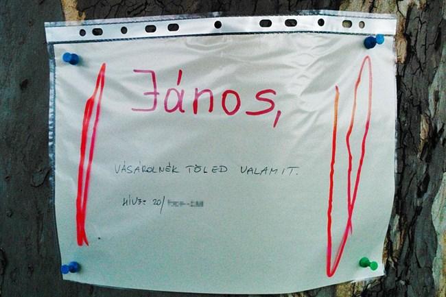janos_1_650x433.jpg