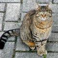 Macskamese a pszichiátriai betegségről