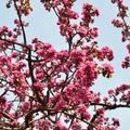 TAVASZ BUDAPESTEN (Lovely springtime in Budapest)