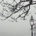 KUTYA DOLOG EZ A VÁROSI TÉL (Winter has arrived in Budapest)