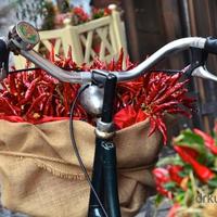 DRBIKEART: EGY KIS OLASZ (Ride a bike in Italy)