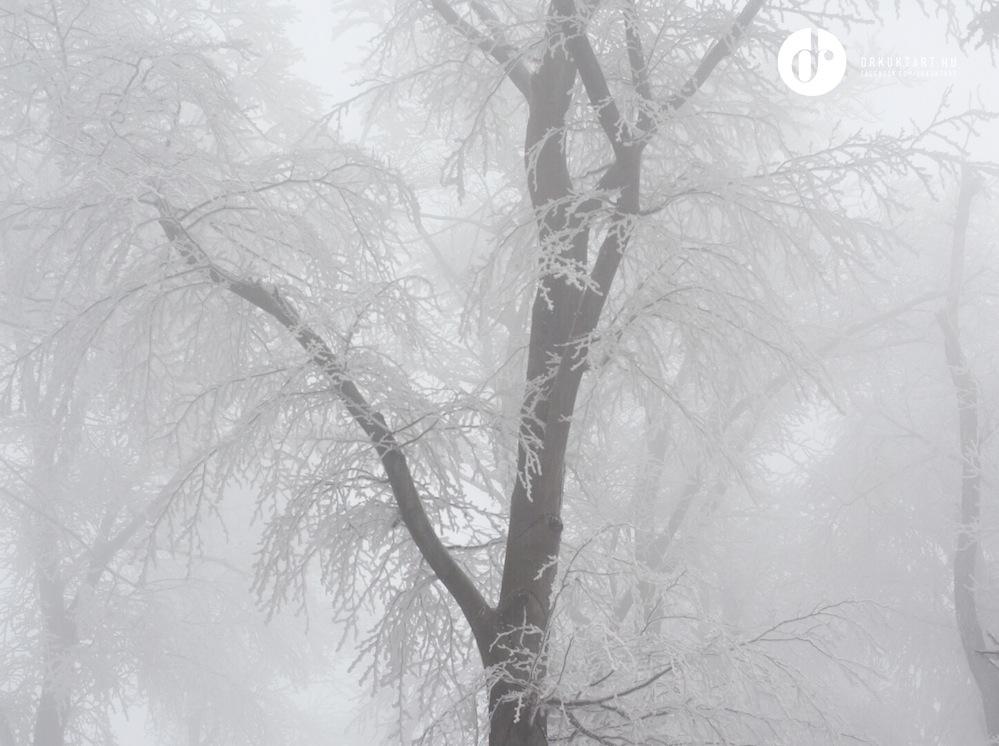 drkuktart_budapest2020januar_08_ja_noshegy.JPG
