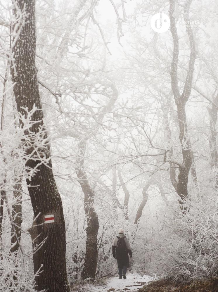drkuktart_budapest2020januar_23_ja_noshegy.JPG
