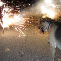 Vigyázzunk házi kedvenceinkre a tüzijáték alatt! Ami az embereknek szórakozás, a kutyáknak félelem!