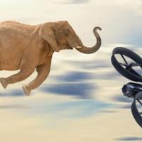 Kiderült: az elefántok félnek a drónoktól