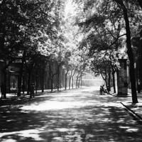 Fabejárás a Semmelweis utcában