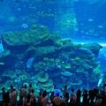 """Nyári """"állatkerti"""" programok Dubajban"""