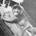 Minden Mintakövető Majmok avagy ha valakinek két anyja van