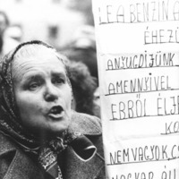 A magyar szavazó