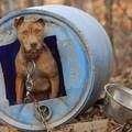 Az Okos Kutya és a láncoskutyák