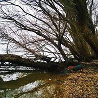 Tiszai lyány a Dunakanyarban keszeget hajt
