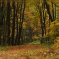 A beautifully coloured rainy autumn forest with 3 hairies