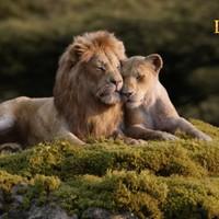 Az oroszlánkirály (The Lion King) - tv spot + plakátok
