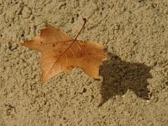 leaf-540273_180.jpg