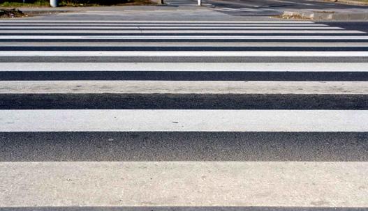 zebra6.jpg