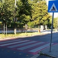 Magyar zebra