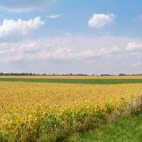 A bioetanol esete a magyar mezőgazdasággal