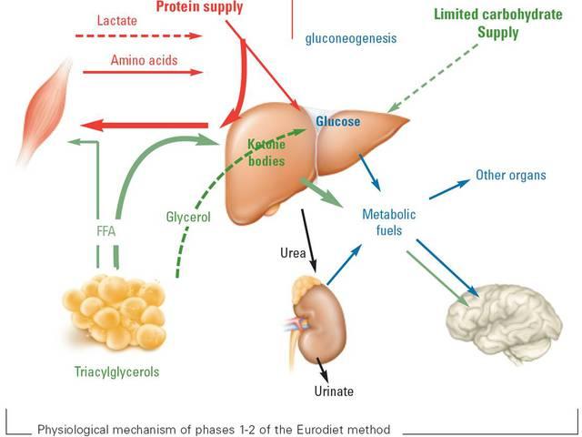 ketózisos étrend példar