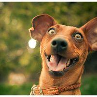 Amikor a kutya hisztizik...