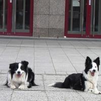 A városi kutya