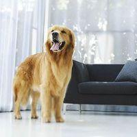 A kutya kertbe vagy lakásba való?