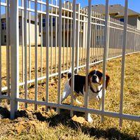 Hopp, ott egy másik kutya a kerítés mögött!