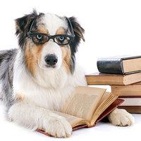 Hogyan neveljünk kutyát?