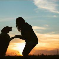 Kutyások és kutyátlanok