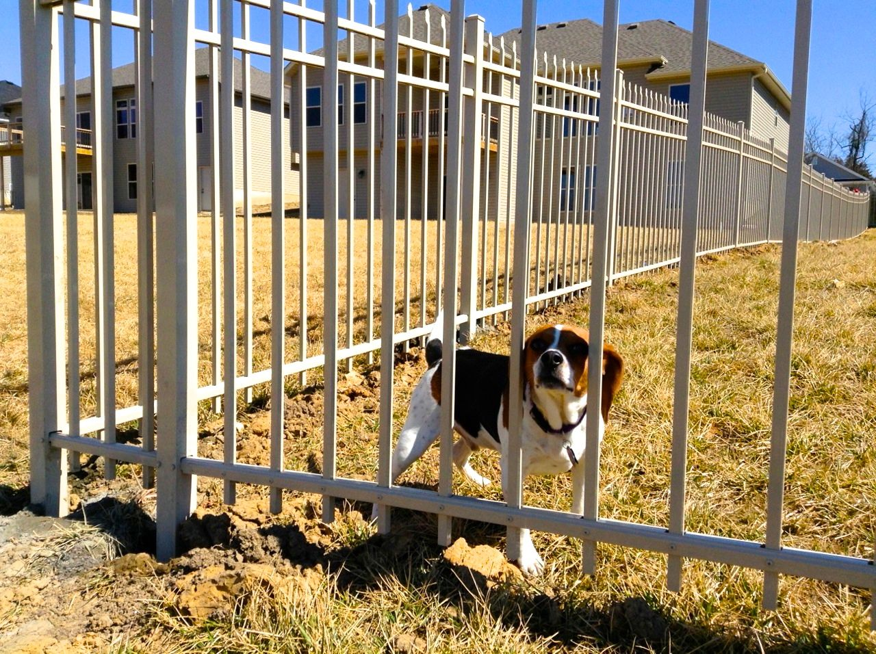 dog-fence-close-up-stlouismo.jpg