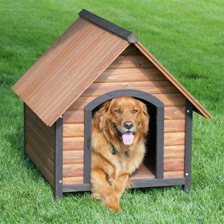 dog-house-4.jpg