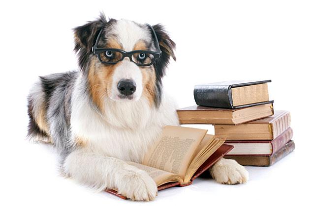 dogstudying.jpg