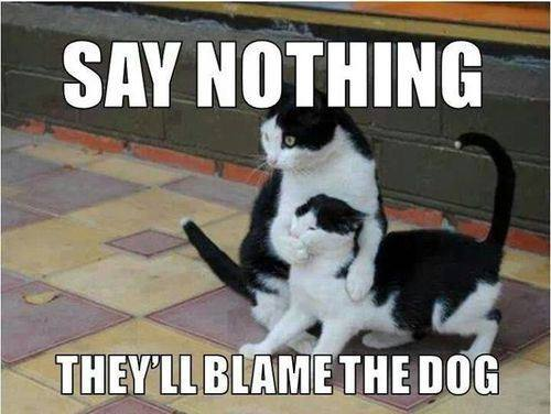 say-nothing-theyll-blame-the-dog.jpg