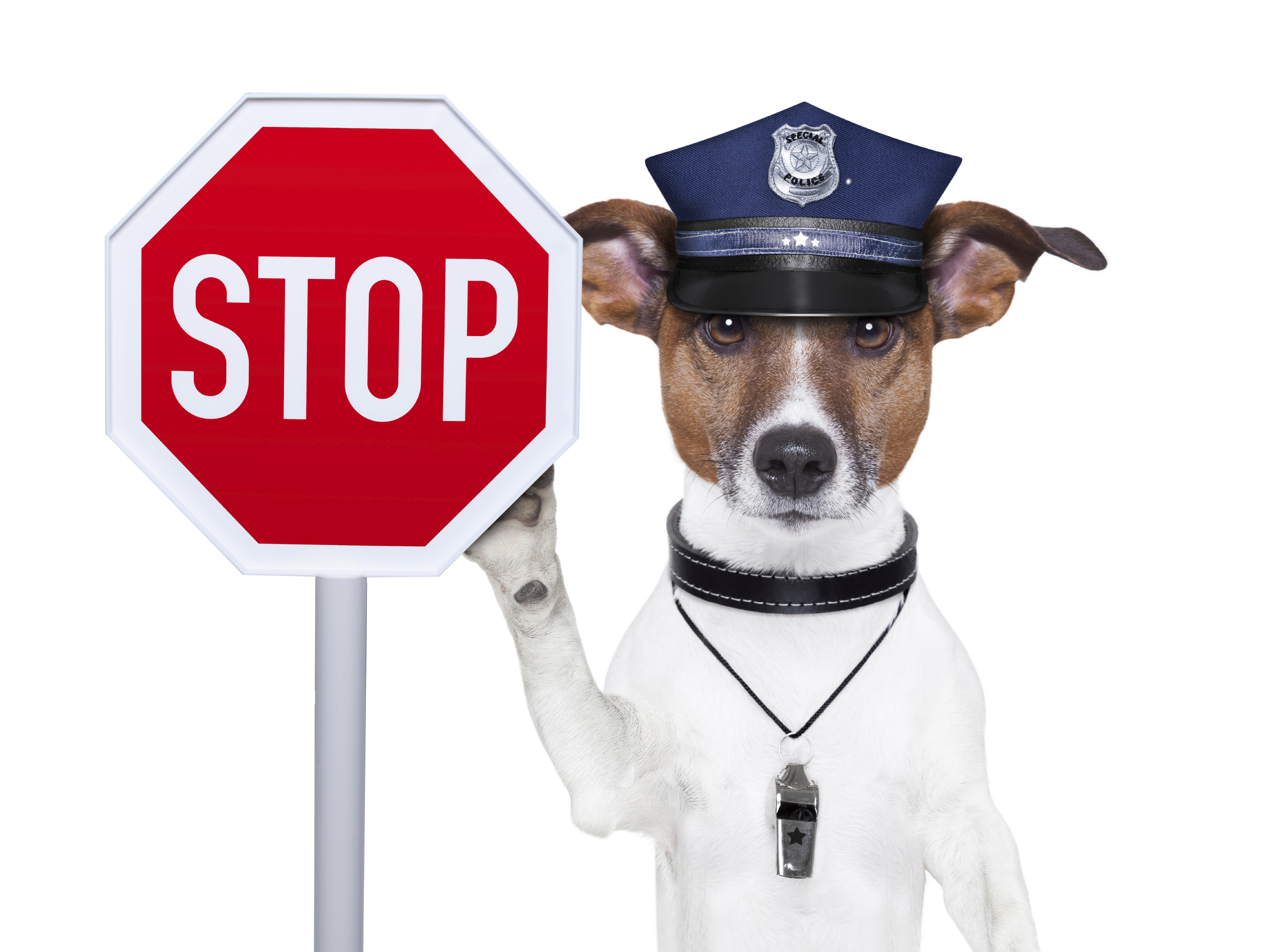 stop-sign-with-a-dog.jpg
