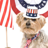 Politikusok kutyái