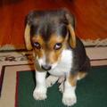 Kutyanevelés - első napok az új otthonban