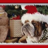 Kutyakarácsony