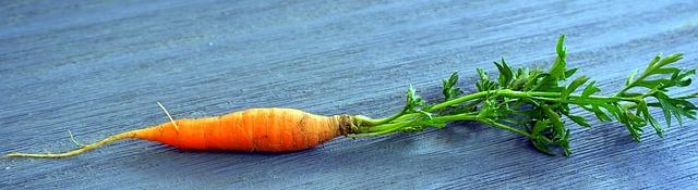 carrot-3118858_640.jpg