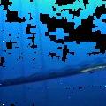 Újabb felvétel a hatalmas evezőhalról