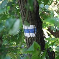 Családi kéktúra (Keszthely-Nagyvázsony)