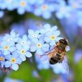 Franciaországban betiltják a méhgyilkos vegyszereket
