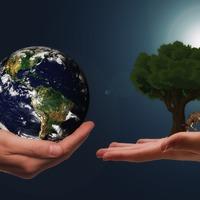 Fát ültetnek a BrandFestival vendégei