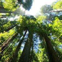 Ha Földről eltűnnének a fák…