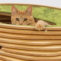 Macska-lakok újrahasznosított anyagokból