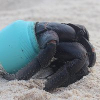 18 tonna műanyag hulladék egy lakatlan szigeten!