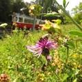 Méhekkel zöldít a bécsi tömegközlekedési vállalat