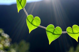 A Föld Napja Ecolife módra